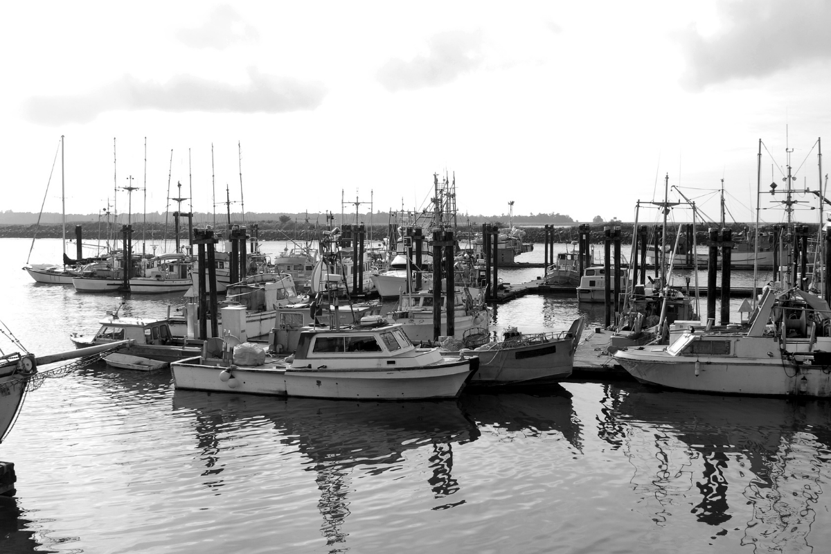 Data science to help improve fishing industry